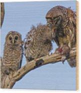 Barred Owl Family Wood Print