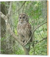 Barred Owl I Wood Print