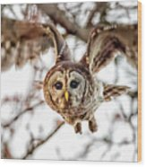 Barred Owl In Flight 4830 Wood Print