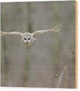 Barred Owl In Flight II Wood Print