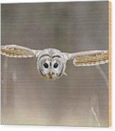 Barred Owl In Flight Wood Print