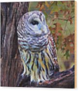 Barred Owl In The Rain Oil Painting Wood Print