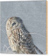 Barred Owl In The Snowstorm Wood Print