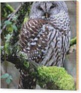 Barred Owl In Tree Wood Print
