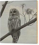 Barred Owl On A Tree Wood Print