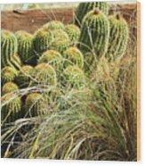 Barrel Cacti Wood Print