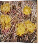 Barrel Cactus Flowers 2 Wood Print