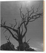 Barren Soul Wood Print
