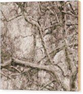 Barren Tree Wood Print