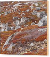 Barrens Wood Print