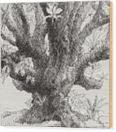 Barringtonia Tree Wood Print