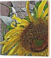 Barrio Sunflower 3 Wood Print