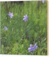 Bartram's Ixia And Bee #3 Wood Print