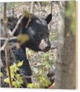 Bashful Black Bear Wood Print