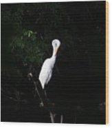 Bashful Egret Wood Print