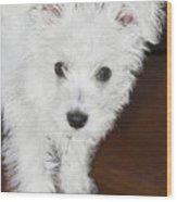 Bashful Puppy Wood Print
