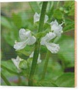 Basil Blossom Wood Print