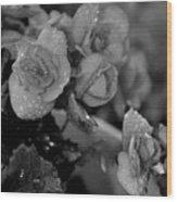 Basket Of Begonias Wood Print