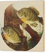 Basking Bluegills Wood Print by Bruce Bley