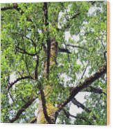 Basking In The Light Of The Lord Wood Print