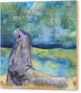 Basking In The Moonlight Wood Print