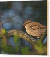 Basking In The Morning Light Wood Print
