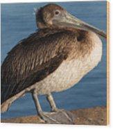 Basking Pelican Wood Print