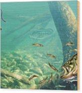 Bass Pond Wood Print