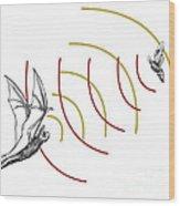 Bat Bio Sonar Wood Print