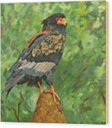 Bataleur Eagle Wood Print