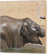 Bath Time At Dublin Zoo Wood Print