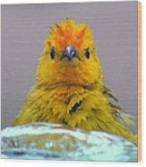 Bath Time Finch Wood Print