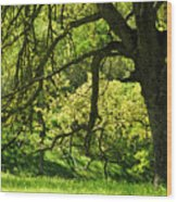 Bathed In Spring Wood Print