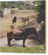 Bathing Horse Wood Print
