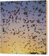 Bats At Bracken Cave Wood Print