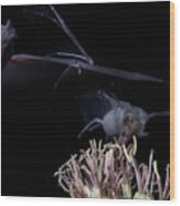 Bats At Work Wood Print
