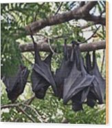Bats Hanging Out Wood Print