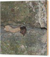 Bats Inside The Pyramid At Grupo Nohoch Mul At The Coba Ruins  Wood Print