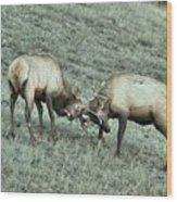 Battling Elk Wood Print