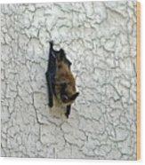 Batty Grin Wood Print