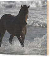 Bay Andalusian Stallion In The Surf Wood Print