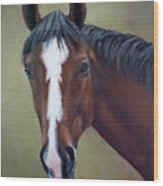 Bay Thoroughbred Horse Portrait Ottb Wood Print