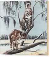 Bayou Bobcats Wood Print by DiDi Higginbotham