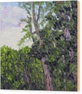 Bc 16 Wood Print