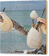 Beach Art - Seashell Shrine - Sharon Cummings Wood Print
