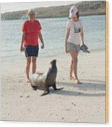 Beach  At Santa Fe Island In Galapagos Wood Print