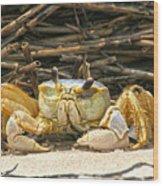 Beach Crab Wood Print