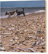 Beach Dogs Wood Print