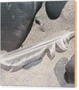 Beach Feather Wood Print