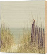 Beach Fence In Grassy Dune South Carolina Wood Print